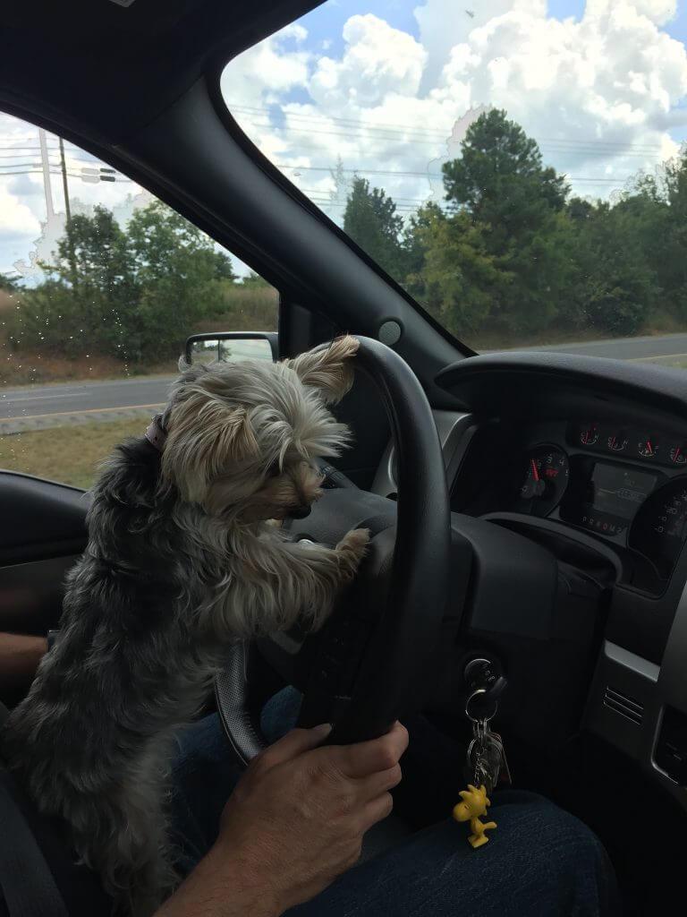 My Driving Helper Pippi